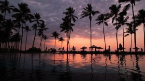 Tropical paradise resort pool sunset with palm tree silhouettes in summer time img