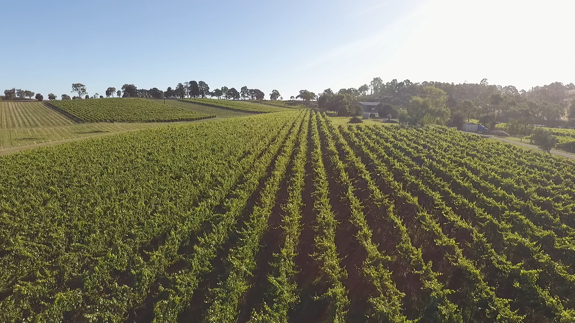 Royalty free Aerial video of Australian Winery grapevines in Summer 3