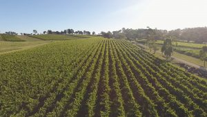 Royalty free video Aerial Drone Australian Winery Grapevines 2 img