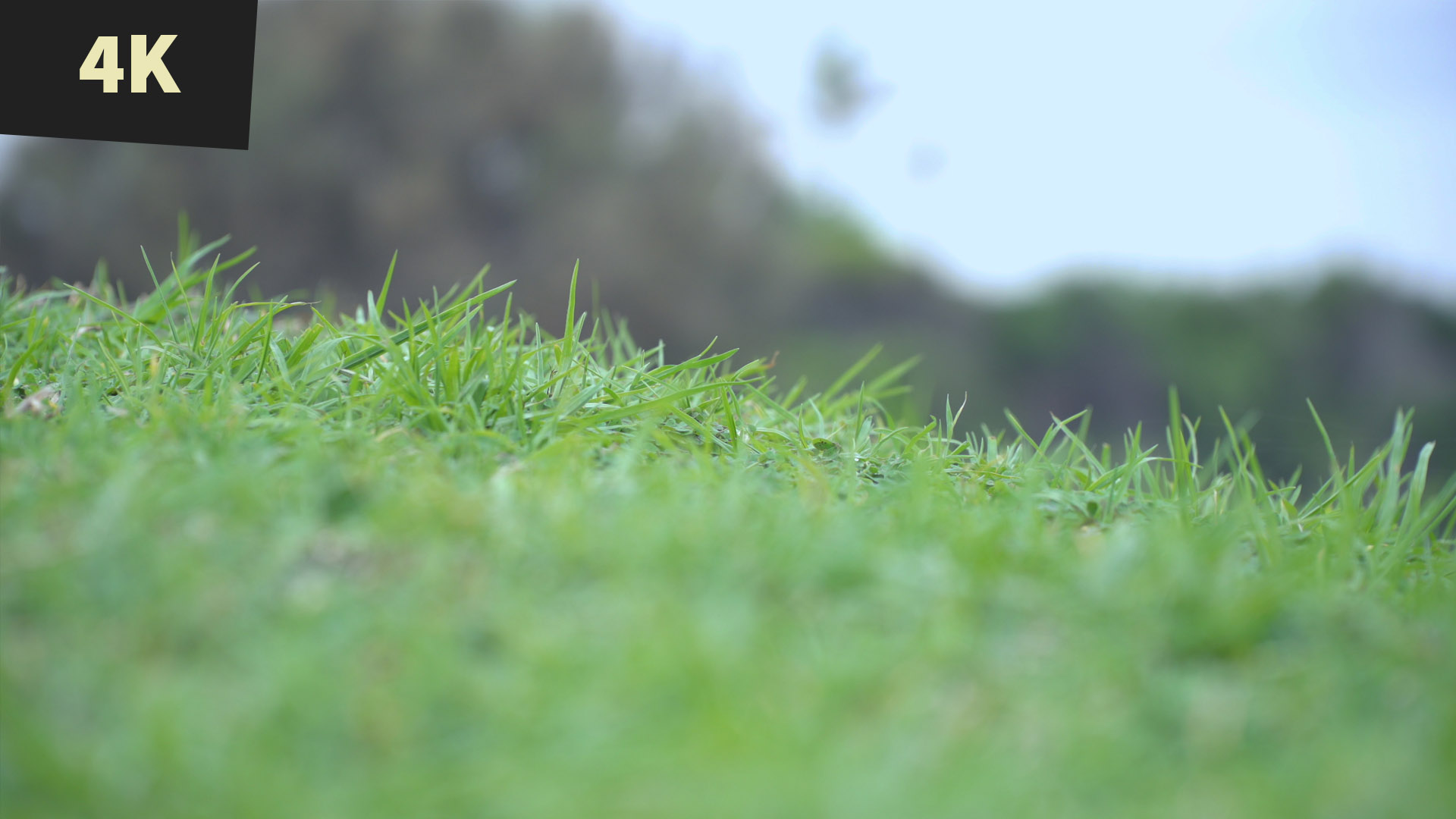 Royalty Free Stock Video Victor Harbour Bluff South Australia Grass on the hill overlooking lake ocean with boat 4K 24FPS img2